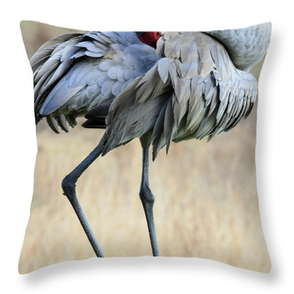 Beautiful Preening Sandhill Crane Throw Pillow by Carol Groenen