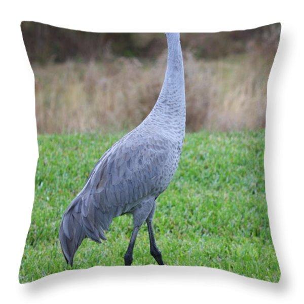 Beautiful Sandhill Crane Throw Pillow by Carol Groenen