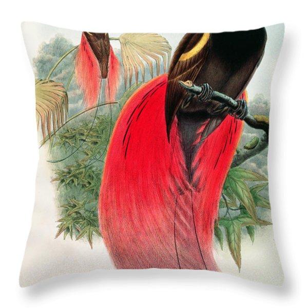 Bird Of Paradise Throw Pillow by John Gould