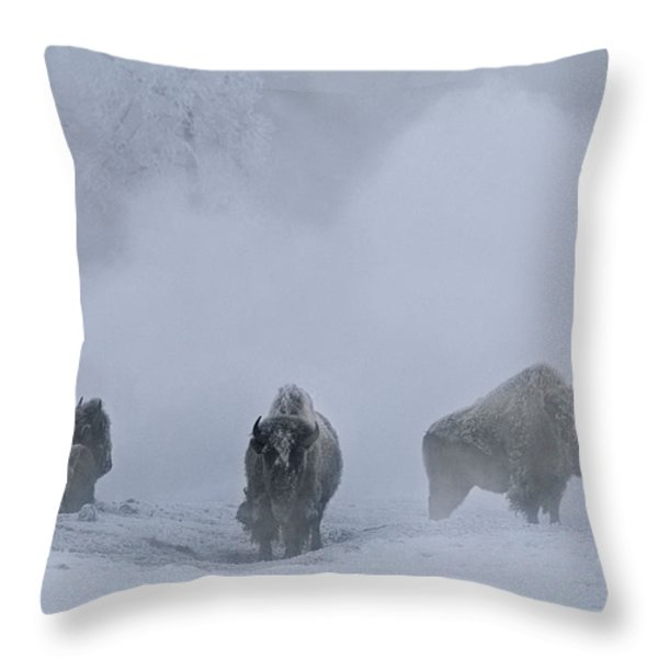 Bison Bison Bison Stand During Winter Throw Pillow by Bobby Model