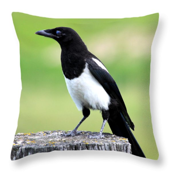 Black-billed Magpie Throw Pillow by Karon Melillo DeVega