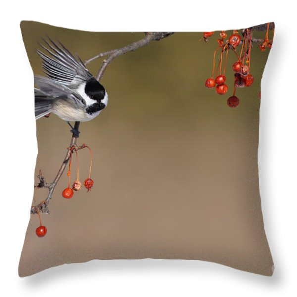 Black-capped Chickadee Throw Pillow by Mircea Costina Photography