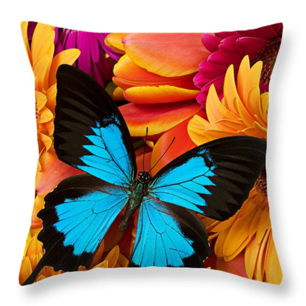 Blue butterfly on brightly colored flowers Throw Pillow by Garry Gay