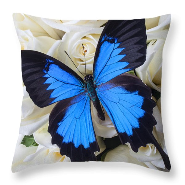 Blue butterfly on white roses Throw Pillow by Garry Gay