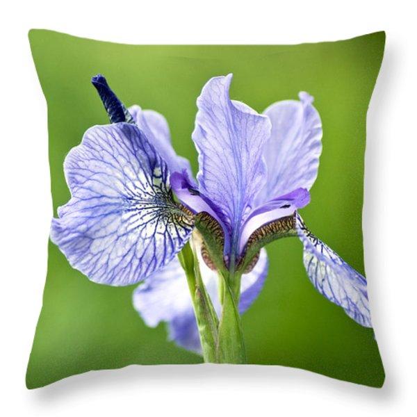 Blue Iris Germanica Throw Pillow by Frank Tschakert