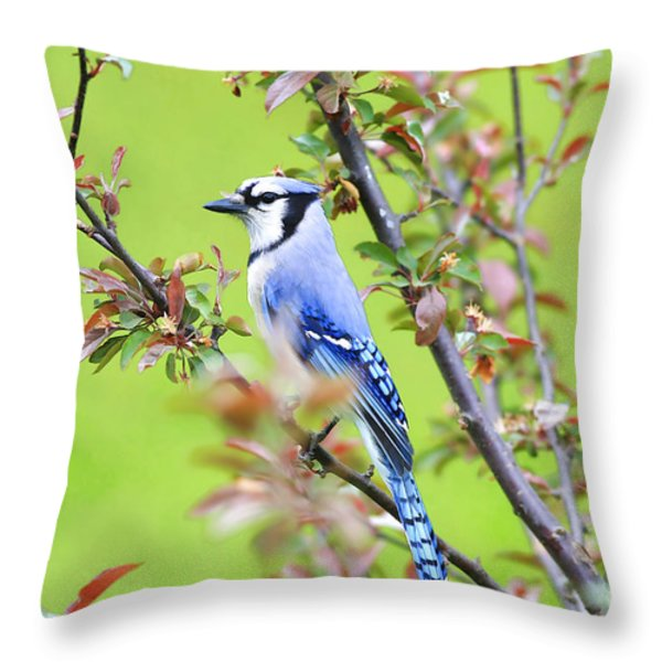 Blue Jay Throw Pillow by Deborah Benoit
