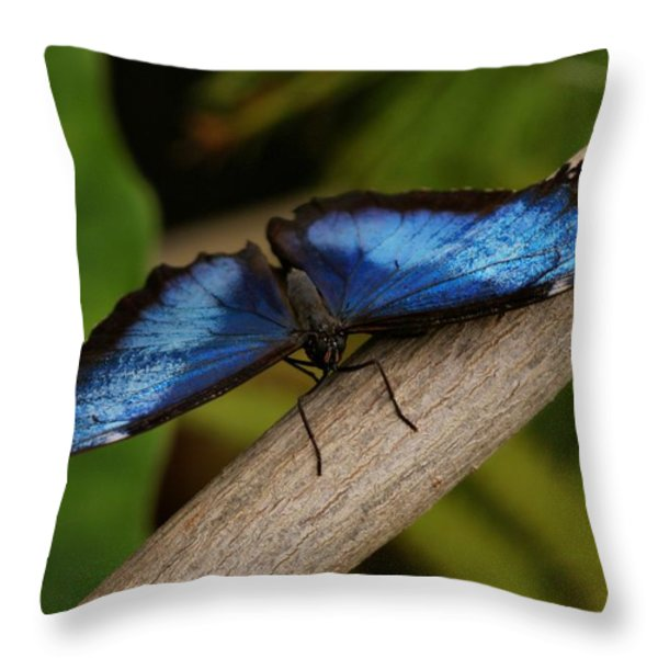 Blue Morpho Butterfly Throw Pillow by Sandy Keeton