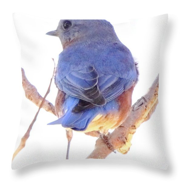 Bluebird On White Throw Pillow by Robert Frederick
