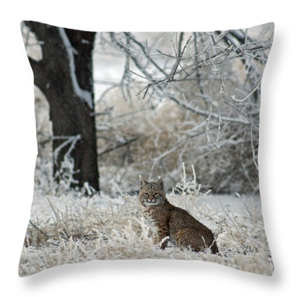 Bobcat and Heavy Frost Throw Pillow by Gary Langley