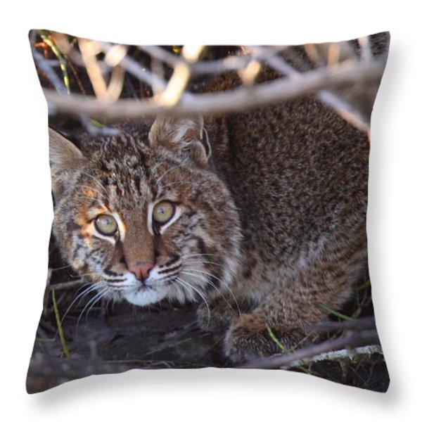 Bobcat Throw Pillow by Bruce J Robinson