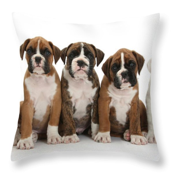 Boxer Puppies Throw Pillow by Mark Taylor