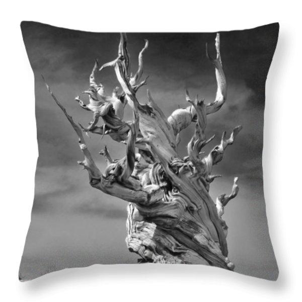 Bristlecone Pine - A Survival Expert Throw Pillow by Christine Till