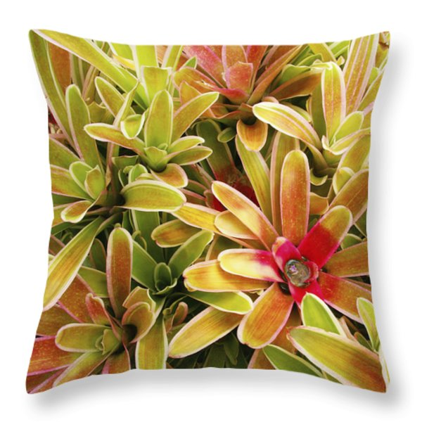 Bromeliad Brightness Throw Pillow by Ron Dahlquist - Printscapes