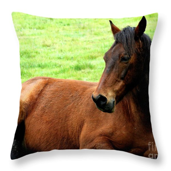 Brown Horse At Rest . R5906 Throw Pillow by Wingsdomain Art and Photography