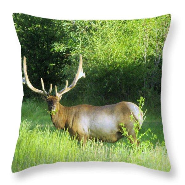 BULL ELK IN VELVET  Throw Pillow by Jeff  Swan