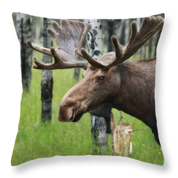 Bull Moose Portrait Throw Pillow by Cathy  Beharriell