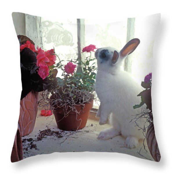 Bunny In Window Throw Pillow by Garry Gay