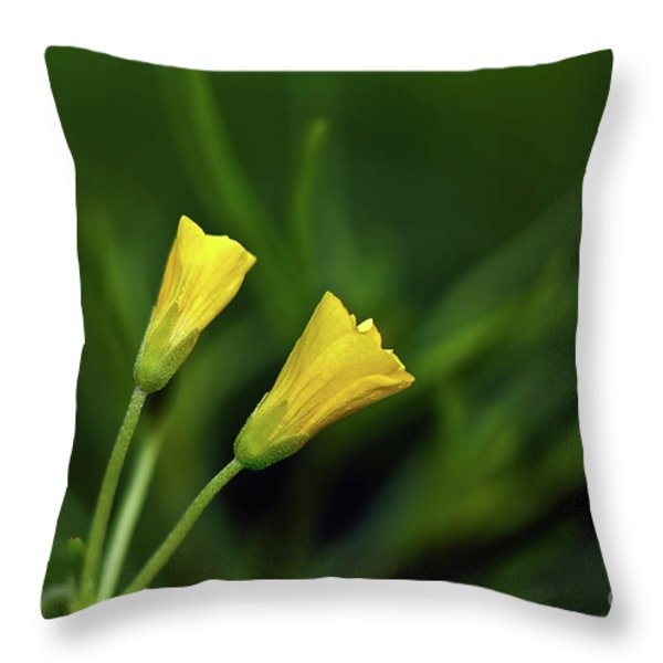 Buttercup Babies Throw Pillow by Lois Bryan