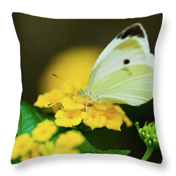 Cabbage White Butterfly Throw Pillow by Betty LaRue