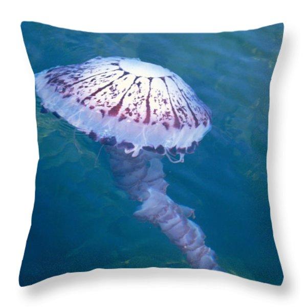 California Marine Life Throw Pillow by Bill Schildge - Printscapes