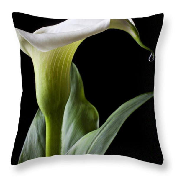 Calla lily with drip Throw Pillow by Garry Gay