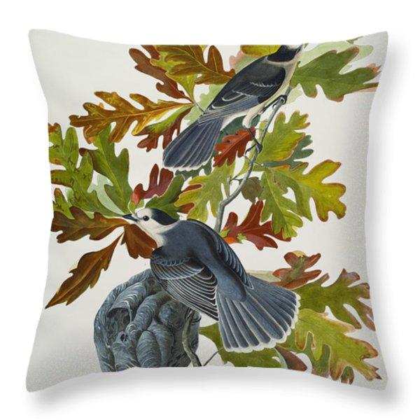Canada Jay Throw Pillow by John James Audubon