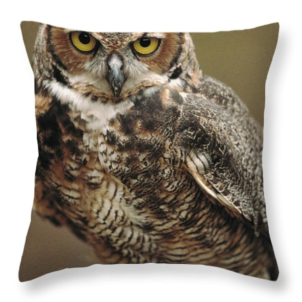 Captive Great Horned Owl, Bubo Throw Pillow by Raymond Gehman