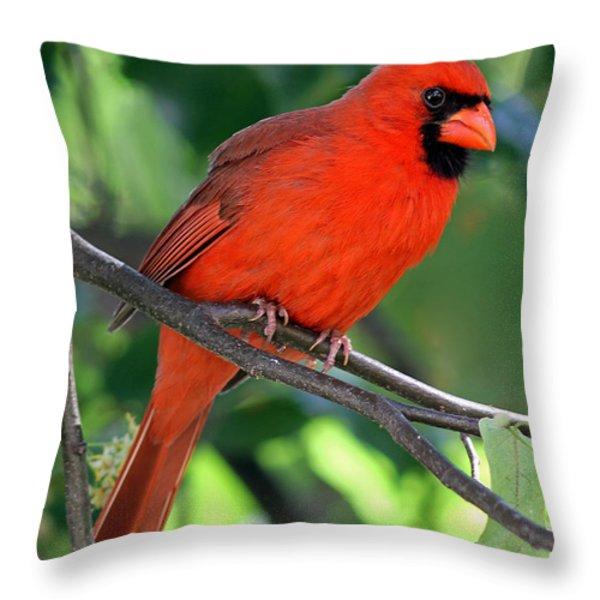 Cardinal Throw Pillow by Juergen Roth