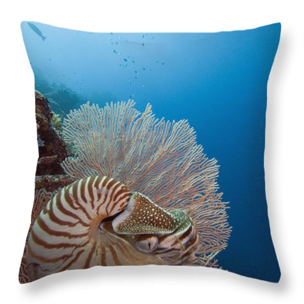 Chambered Nautilus Throw Pillow by Dave Fleetham - Printscapes
