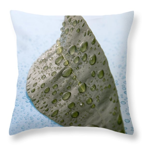 Citrus Leaf Throw Pillow by Frank Tschakert
