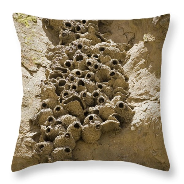 Cliff Swallow Hirundo Pyrrhonota Nests Throw Pillow by Rich Reid