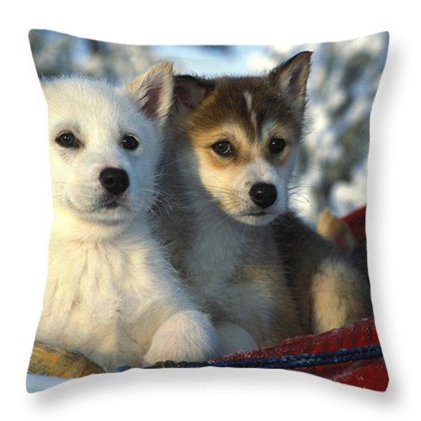 Close Up Of Siberian Husky Puppies Throw Pillow by Nick Norman