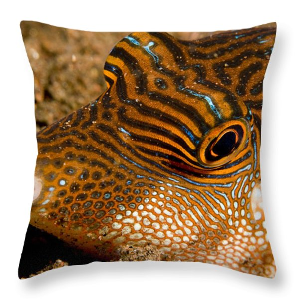 Closeup Of A Spotted Toby Canthigaster Throw Pillow by Tim Laman