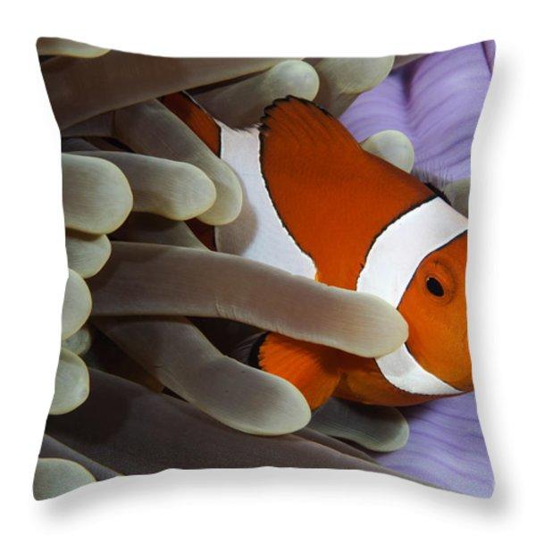 Clown Anemonefish, Indonesia Throw Pillow by Todd Winner