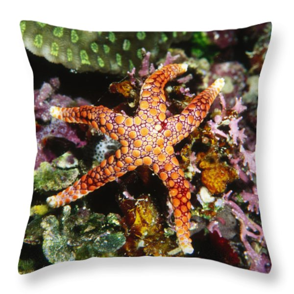 Colorful Seastar Laying On Cean Reef Throw Pillow by James Forte