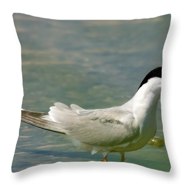Common Tern Portrait Throw Pillow by Cliff  Norton