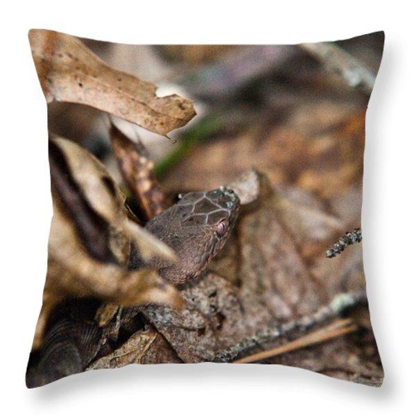 Copperhead 3 Throw Pillow by Douglas Barnett