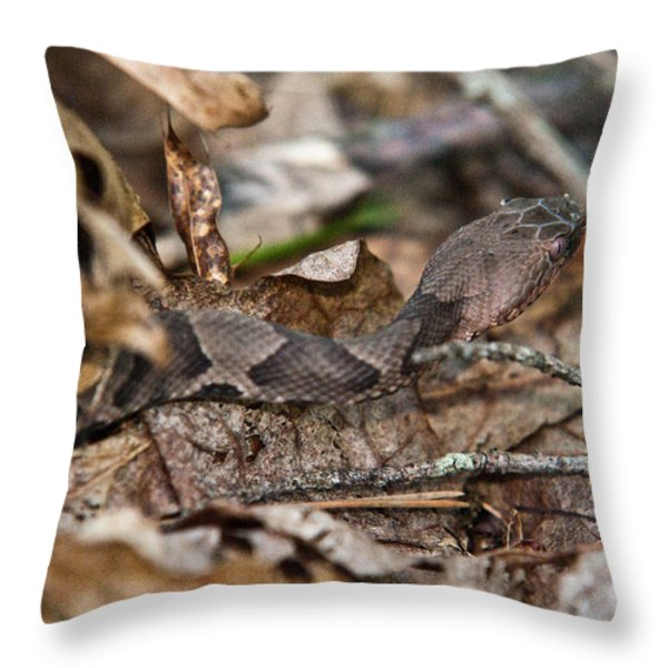 Copperhead 4 Throw Pillow by Douglas Barnett
