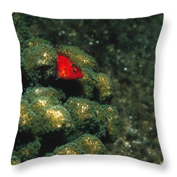 Coral Hawkfish Hiding In Coral Throw Pillow by James Forte
