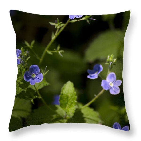 Creeping Speedwell Throw Pillow by Christina Rollo
