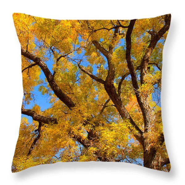 Crisp Autumn Day Throw Pillow by James BO  Insogna
