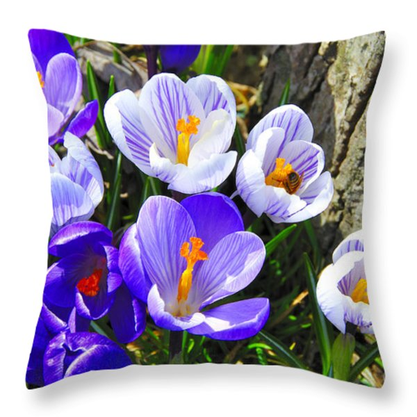 Crocus tommasinianus Throw Pillow by Thomas R Fletcher