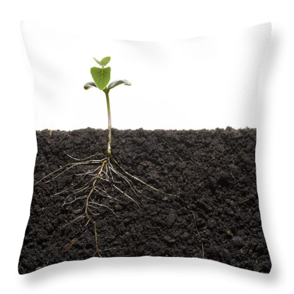 Cross-section Of Soybean Seedling Throw Pillow by Mark Thiessen