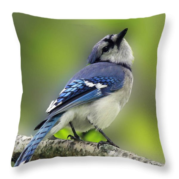 Curious Blue Jay Throw Pillow by Inspired Nature Photography By Shelley Myke