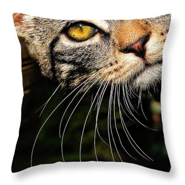 curious kitten Throw Pillow by Meirion Matthias