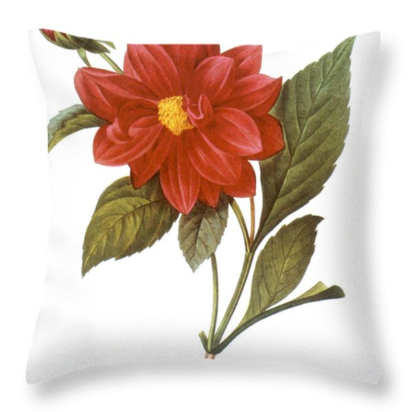 Dahlia (dahlia Pinnata) Throw Pillow by Granger