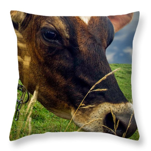 Dairy Cow Eating Grass Throw Pillow by Bob Orsillo
