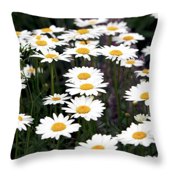 Daisies Throw Pillow by John Rizzuto