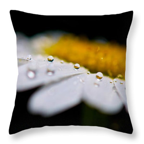 Daisy Water Drops Triptych Throw Pillow by Lisa Knechtel