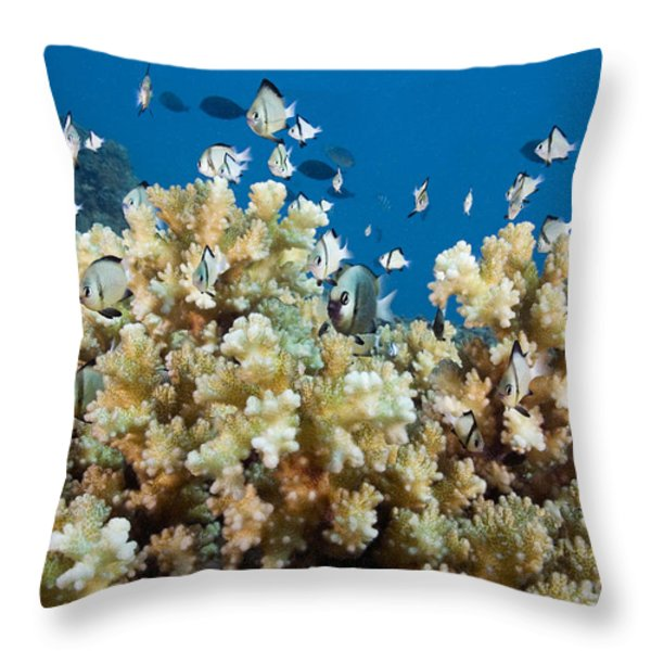 Damselfish Among Coral Throw Pillow by Dave Fleetham - Printscapes